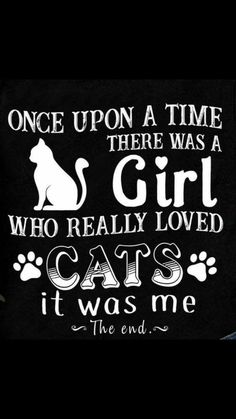 New funny cats pics kittens mom 39 ideas Crazy Cat Lady, Crazy Cats, Cute Cats, Funny Cats, Cats Humor, Kitten Quotes, Cat Signs, Cat Room, Cat People