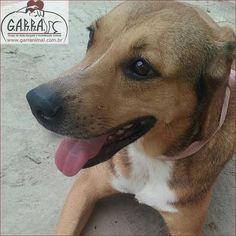 G.A.R.R.A. - Grupo de Ação, Resgate e Reabilitação Animal: Mel, uma Garrinha muito especial!