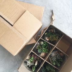 Packaging up succulent terrariums and other plant life for the @porterflea later this week in Nashville TN! We are debuting a few different things like our ' air plant which we designed & made in house.  Nashville see you Saturday from 10am-5pm at @skywaystudiosnashville.#theZenSucculent #ModernPlantStyle #theZenSucculent
