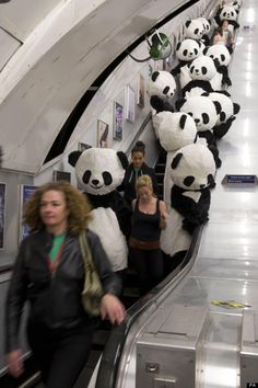 > Jul 6 - Panda-monium as pandas invade London Underground - Photo posted in BX Daily Bugle - news and headlines Panda Love, Cute Panda, London Underground, Underground Tube, Story Starter, Bizarre, Starters, Mickey Mouse, Funny Pictures