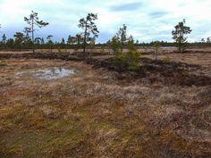 Swamp Selkäsaarenneva, Kauhajoki, Finland pic - propluto.kuvat.fi by Heikki Rantala