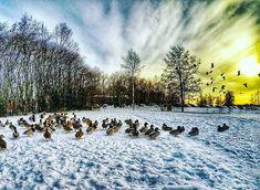 Somelinnut.  #europe  #instafinland  #järvenpää  #travel  #alltags_member  #traveling  #loves_finland  #finnishboy  #finland_photolovers  #landscape_lovers  #finland4seasons  #travelphotography  #instatravel  #finland_frames  #igscglobal  #fotofanatics_nature_  #thisisfinland  #discoverfinland  #igscandinavia  #ig_week_finland  #Loves_United_Finland  #fotofanatics_alltags_  #finnishmoments  #lovelyfinland  #thebestoffinland  #nature  #visitfinland  #unlimitedscandinavia  #beautyofsuomi…