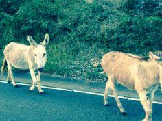 Donkeys on St John