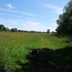 Skyline Walk, Bath, at Claverton Down