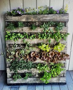 Indoor Vertical Gardens - Right now you are 7 easy steps away from a fantastic DIY pallet garden! Small spaces can go green and reduce how Cool! Make your rooms come alive with a vertical garden Herb Garden Pallet, Pallets Garden, Pallet Gardening, Organic Gardening, Urban Gardening, Vegetable Gardening, Vertical Pallet Garden, Veggie Gardens, Palette Herb Garden