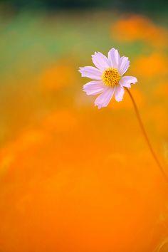 Scorching Hot Day | さくら / *Sakura* | Flickr