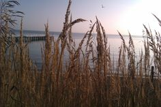 #Morze, #sea, sun, #Gdynia, Orłowo