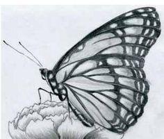 Cómo dibujar una mariposa - 5 pasos (con imágenes)