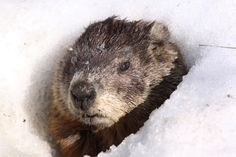 Twenty Interesting Things About...Groundhog Day
