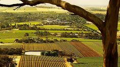 """""""Barossa Valley in South Australia. Great fun for wine buffs Places Ive Been, Places To Go, Spring Scene, Adelaide South Australia, Wine Magazine, Great Barrier Reef, Travel Pictures, Landscape Photography, France"""