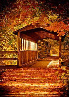 Bridge on the Kal-Haven Trail - what a wonderful, warm, rich autumn scene. Love the gold color!
