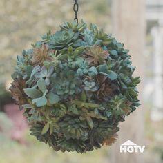 Create a Succulent Sphere / kokedama