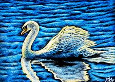 ACEO TW JAN - White #Swan ORIGINAL #Scratchboard Art #Bird Animal Nature Water EBSQ #Realism #aceo #art