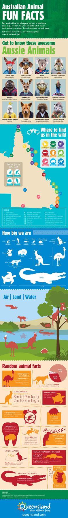 Australian Animal Facts Infographic