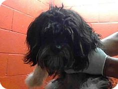 Esteban (8-13-2013 - at Los Angeles County Animal Shelter - Downey