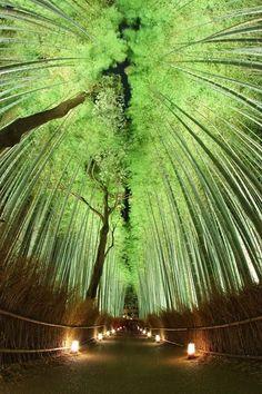 """The Sagano Bamboo Forest in Kyoto, Japan"" Bamboo Forest Japan, Beautiful World, Beautiful Places, Cs6 Photoshop, Japanese Bamboo, Plein Air, Japan Travel, Hawaii Travel, Scenery"