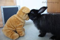 Bunny whispers secrets in a plush friend's ear - April 29, 2014 - More at the link: http://dailybunny.org/2014/04/29/bunny-whispers-secrets-in-a-plush-friends-ear/ !