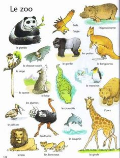animaux First thousand words in French French Teaching Resources, Teaching French, French Alphabet, Gatos Cat, Learn To Speak French, Le Zoo, French Verbs, French Education, French Classroom
