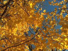 Sunny fall Autumn Photos, Painting, Art, Fall Cover Photos, Craft Art, Paintings, Kunst, Gcse Art, Draw