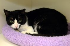NYC: More than just a flower, it's Gardenia! Ready for adoption at the ASPCA Adoption Center. SN: Her eyes are everything!