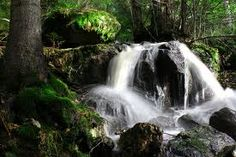 swedish nature Waterfall, Forests, Nature, Outdoor, Inspiration, Outdoors, Biblical Inspiration, Woods, Rain