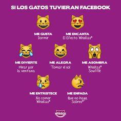 Whiskas Mexico - Los gatos son las estrellas de Facebook. Para ellos también nuevos botones