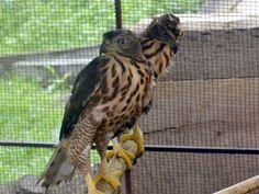 Itanagar Zoo, Zoological Park - in Arunachal Pradesh, India