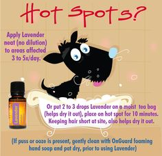 Remarkable Dog Training Tips For The Average Joe Ideas. Awesome Dog Training Tips For The Average Joe Ideas. Essential Oils Dogs, Essential Oil Uses, Dog Care Tips, Pet Care, Pet Tips, Young Living Pets, Dog Hot Spots, Perfume Tommy Girl, Doterra Essential Oils