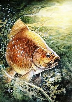 Bass Fishing Pictures, Fish Background, Underwater Art, Fish Drawings, Fish Print, Carp Fishing, Cool Paintings, Wildlife Art, Sea Creatures