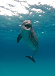Precious!!!! dolphin smiles. Dolphins are highly intelligent creatures.