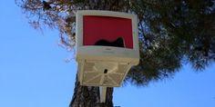 Geri dönüşümde son nokta: Monitörden kuş yuvası yaptılar.. Detaylar ajanimo.com'da.. #ajanimo #ajanbrian #kendinyap #monitör #pc #bilgisayar #kuş #bird #animal #hayvan