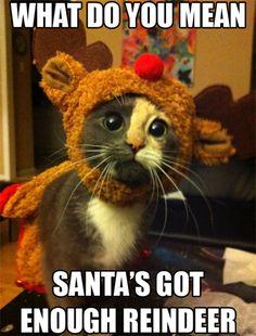 What do you mean Santa' shot enough reindeer?