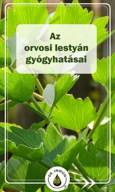 Health 2020, Herb Garden, Plant Leaves, Health Fitness, Herbs, Plants, Herbs Garden, Herb, Plant
