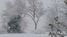 Winter in Italië! Van zomer sproeten naar warme wanten.  Koninkje winter wat heb je voor ons in petto?  #olijfbomen #in #de #sneeuw  #lemarche #bedandbreakfast #LaVecchiaScuola