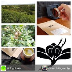 @blogbiozen will soon be publishing an article for the french public about our tea.  Repost from @blogbiozen - Soon on my #blog discover #découvrez #teas #thés  @theteacrane #bio #organic #japan  #Japon #osaka #sencha #roasted #bancha #black #tea #partner #partenaires now you coud read about The Tea Crane on my #blog #article www.blogbiozen.com