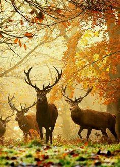 Me acorde de bambi ;)