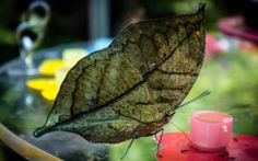 papiliorama Switzerland, Canon, Plant Leaves, Wanderlust, Plants, Animals, Photos, Butterfly Species, Animales