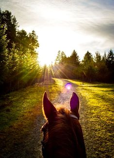 God gave us the gift of horses and nature