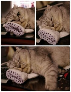I have nothing to eat but to lie down and sleep Baby Animals, Funny Animals, Cute Animals, Animal Funnies, I Love Cats, Cute Cats, Funny Cats, Animal Experiences, Cat Whiskers