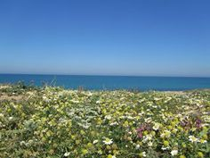 sea and flowers