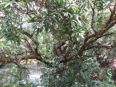 Agro-écologie ! Slow Travel, Mauritius, Agriculture, Plants, Gardens, Sustainable Tourism, Tropical Garden, Plant, Planets