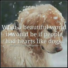Golden Retriever - Pourquoi sont-ils les animaux de compagnie parfaits - Whoever said diamonds are a girls best friend never owned a dog - Chien Stuffed Animals, I Love Dogs, Cute Dogs, Animals Beautiful, Cute Animals, Animals Dog, Animals Kissing, Beautiful Dogs, Funny Animals