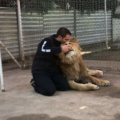 Some alone time with Han. And Michael obviously crying wanting to come in. Who would have guessed that Han would suck my finger too?  Tiempo solo con Hánito. Y #michaelingui llorando por qué quería entrar... #LukeAndHanBJWT #TheBigPrideBJWT #SaveLions #SaveJaguars #SaveOurPlanet #BeHuman #NotPets #NoSonMascotas #blackjaguarwhitetiger #RescuedLions