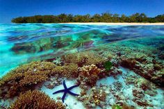 Great barrier reef, Australia - Seven Natural Wonders of the World What A Wonderful World, Beautiful World, Beautiful Places, Amazing Places, Awesome Things, Great Barrier Reef, Dream Vacations, Vacation Spots, Places To Travel