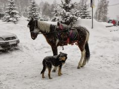 horse & dog in the snow next to Medeo Ice Rink - in the mountains above Almaty, Kazakhstan