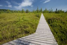 The Mer Bleue Bog in Ottawa is one of the most outstanding natural features of the Greenbelt. The 3,500-hectare conservation area has a northern eco-s...
