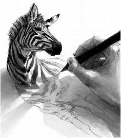 mano dibujando cebra