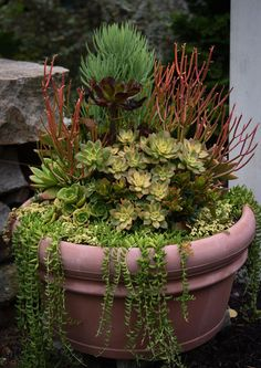 September Report: Containers 2016 | Garden Foreplay