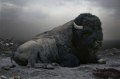 Simen Johan's Bison