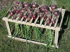 drying rack for red onions Veg Garden, Vegetable Garden Design, Garden Pests, Garden Tools, Victory Garden, Square Foot Gardening, Farm Gardens, Garden Planning, Garden Inspiration